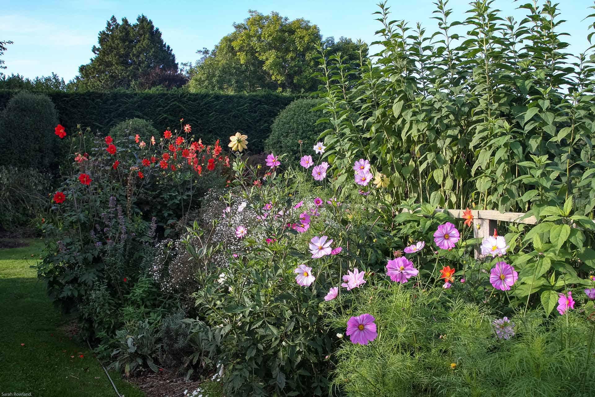 Brookfield Park Gardens Flowers