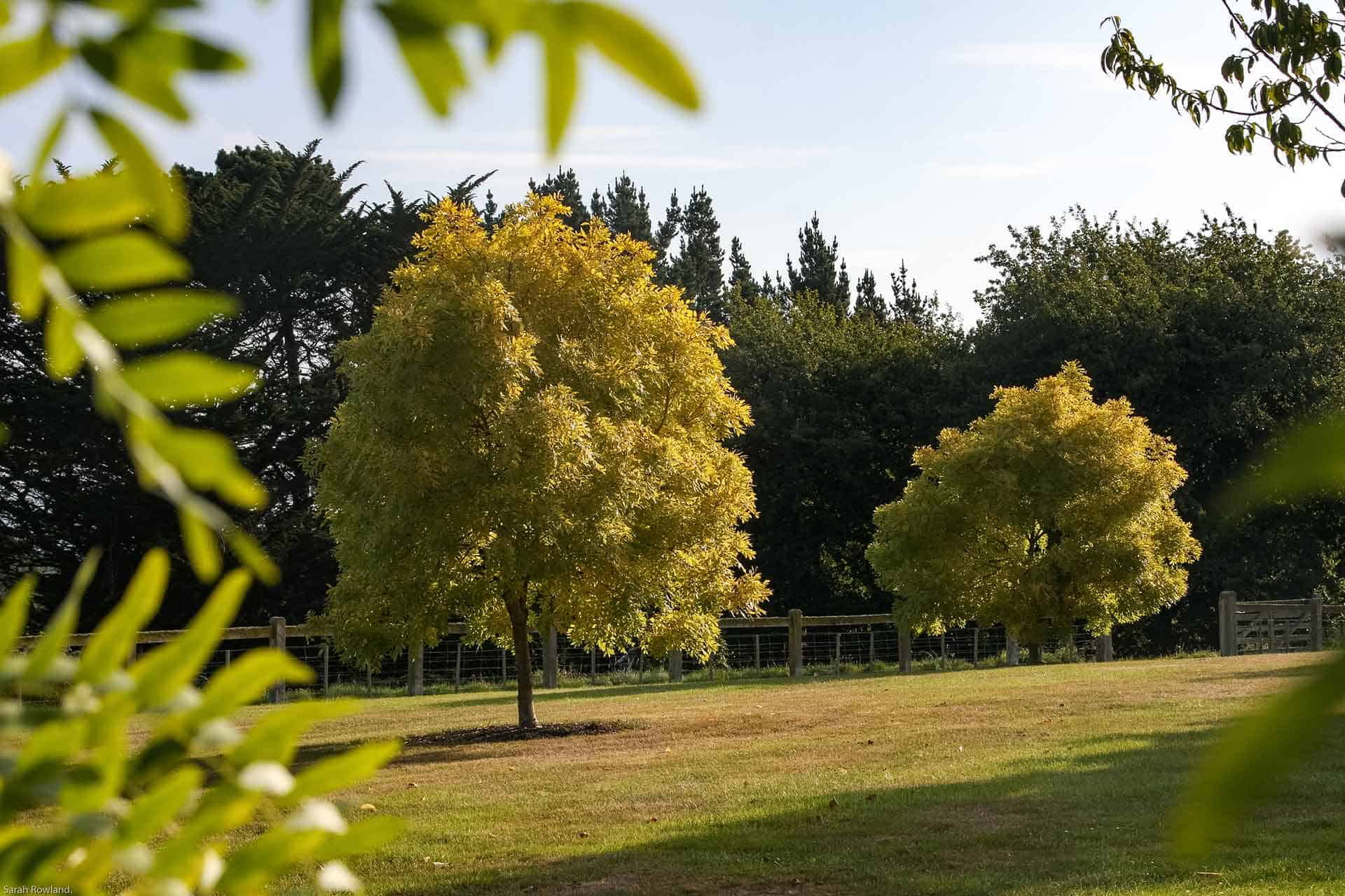 Brookfield Park Gardens Tree